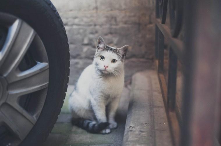 Sami po sebe peterburgskie koty (1)