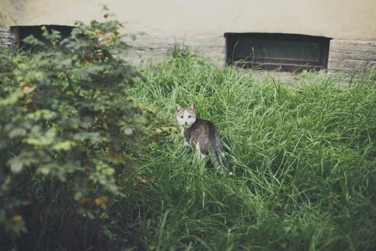 Sami po sebe peterburgskie koty (11)