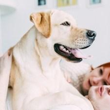 Labrador-Miha-1 (13)