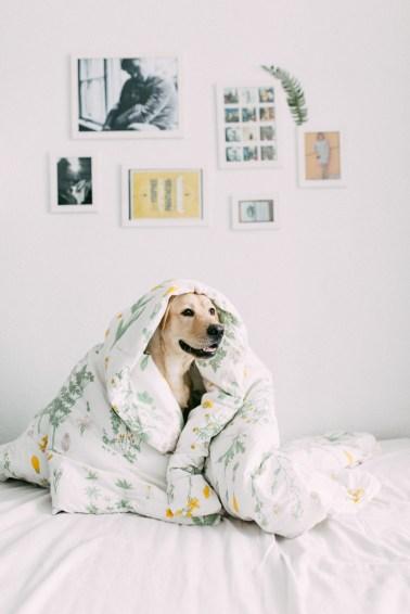 Labrador-Miha-1 (23)