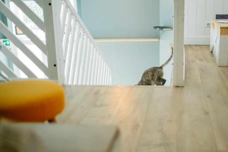 Romeow Cat Bistrot-1 (18)