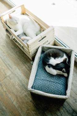Romeow Cat Bistrot-1 (21)