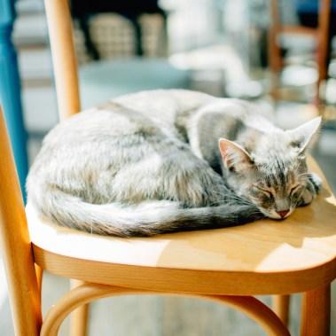 Romeow Cat Bistrot-1 (22)