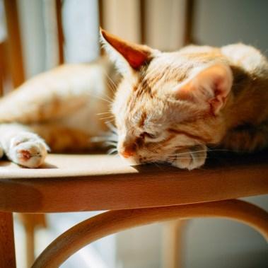 Romeow Cat Bistrot-2 (12)