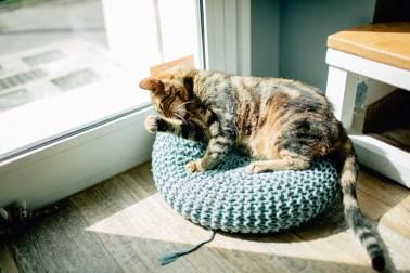 Romeow Cat Bistrot-2 (6)