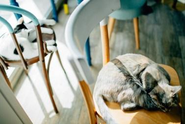 Romeow Cat Bistrot-2 (9)