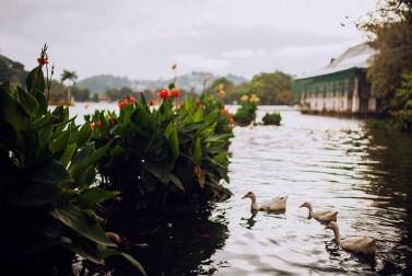 Любовь с первого взгляда: отпуск в Шри-Ланке