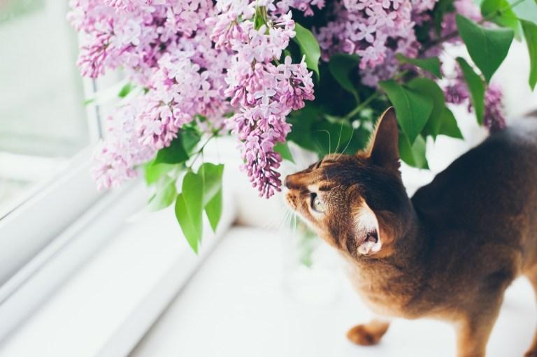 Рыжее счастье: кошка Ассоль