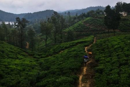 В поисках лучшего в мире чая. Шри Ланка.