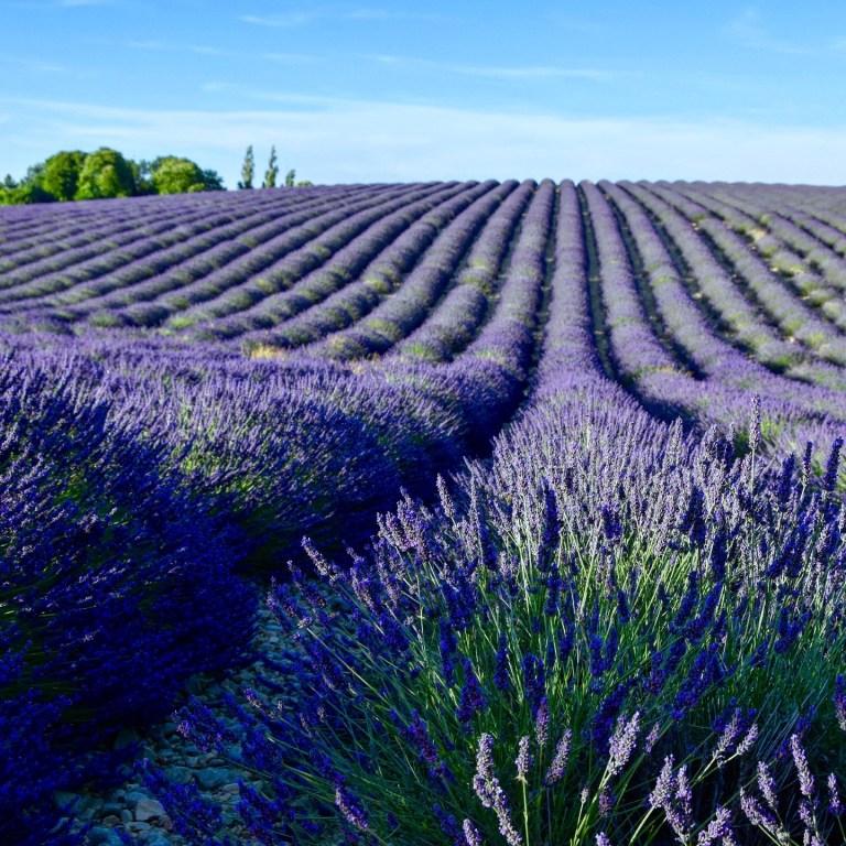 Романтичный Прованс, Франция