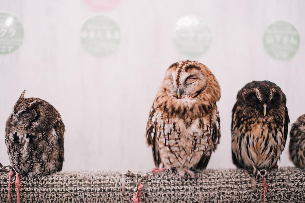 owls-151119-10