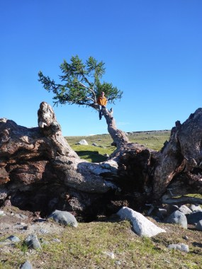Climbing a tree in Tavan Bodg National Park; Western Mongolia