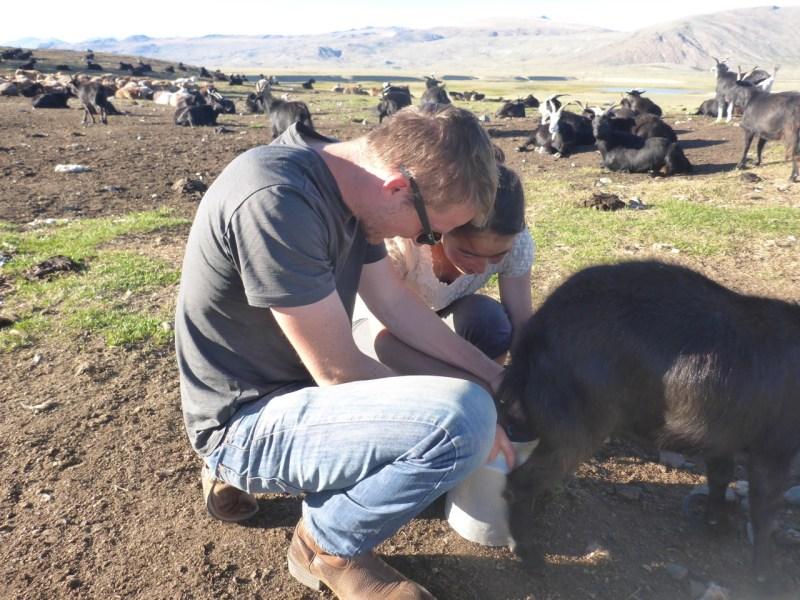 Milking goats - Tavan Bodg National Park; Western Mongolia