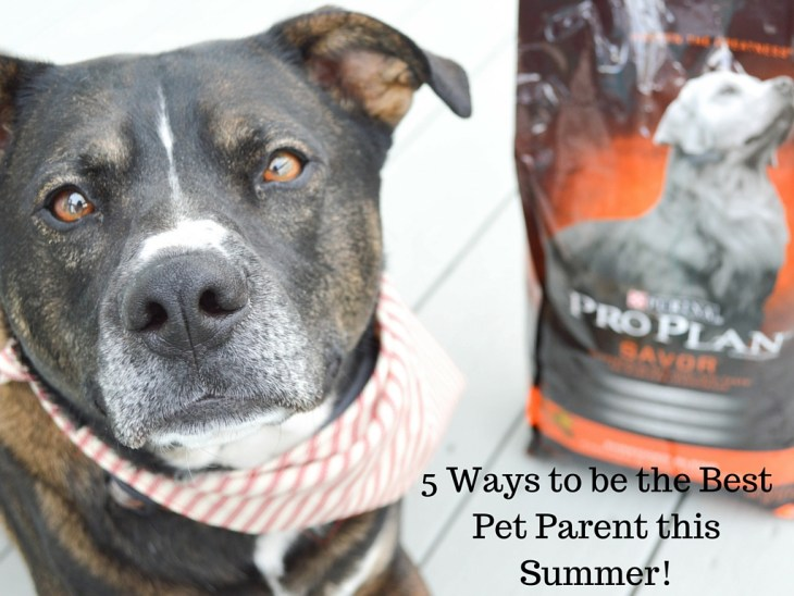 5 Ways to be the Best Pet Parent this Summer!