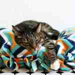 DIY No-Sew Cat Bed + Ways to Keep Your Cat Happy and Healthy