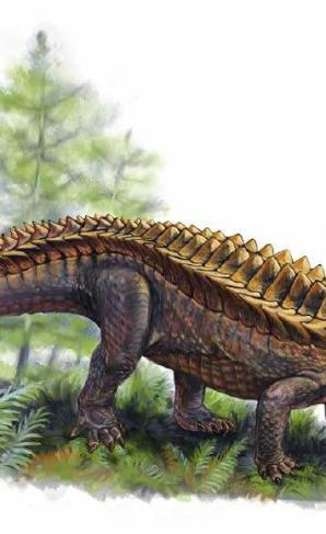 "An illustration of what Matt Celeskey and Dr. Andrew Heckert think the Gorgetosuchus pekinensis looked like. Celeskey said, ""Gorgetosuchus was only described a few years ago, from only 20 pieces of armor, but that's enough to tell us that this was a very unique animal."""