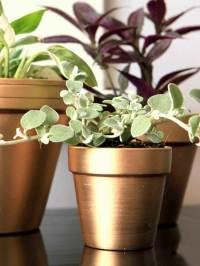 17 DIY Ideas to Dress Up Terra-Cotta Flower Pots - The ART ...