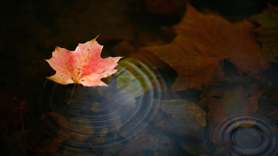 Live Wallpaper Fall Leaves From Restless To Restful The Difficult Art Of Rest The