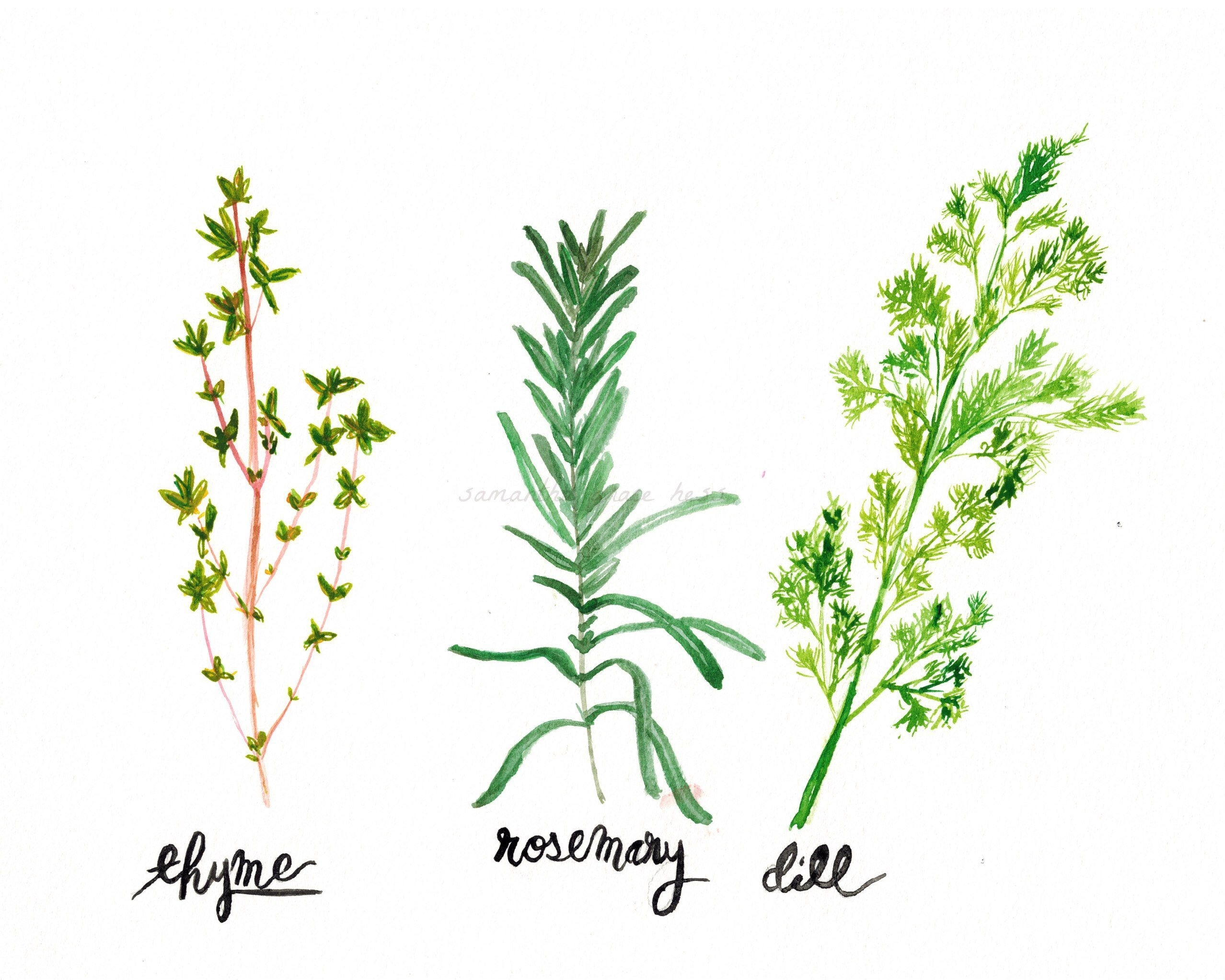 Herb Wall 2019 Latest Herb Wall Art