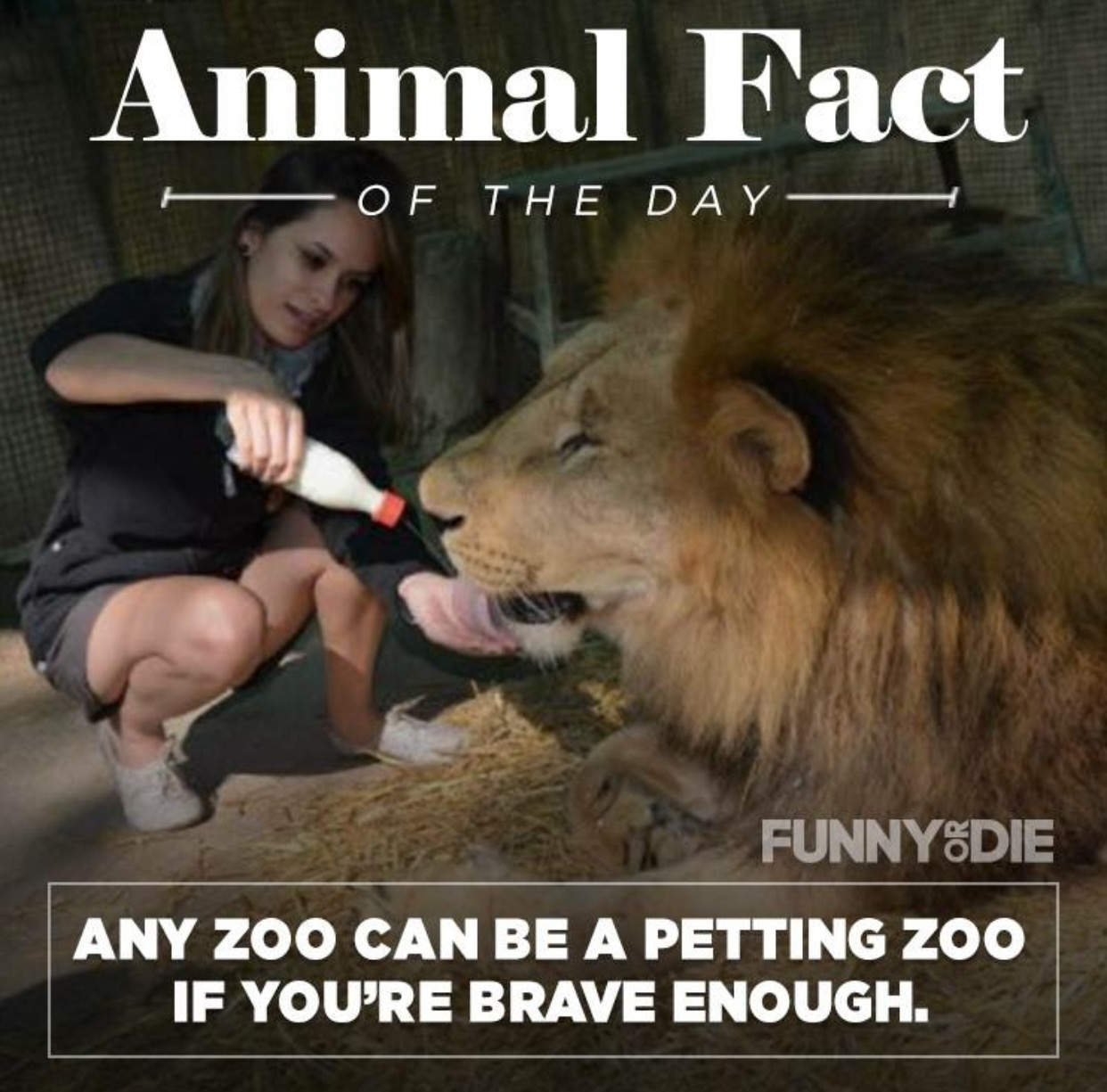 Brain Age 25 Funny Animal Facts That Might Make You Pee A Little