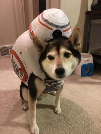 These Star Wars Dog Costumes Are So Cute They Should Be ...