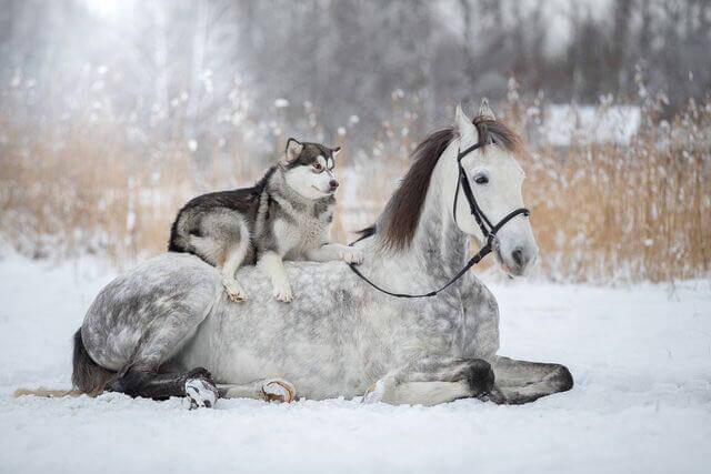 Anime Devil Wallpaper Friendship Between A Horse And Husky Dog Caught In