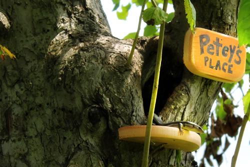 petey-lizard-skink-tree-home