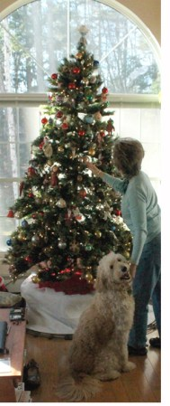 decorating-tree-momjo