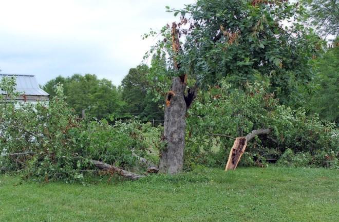 crab-apple-tree-storm-June2014-a