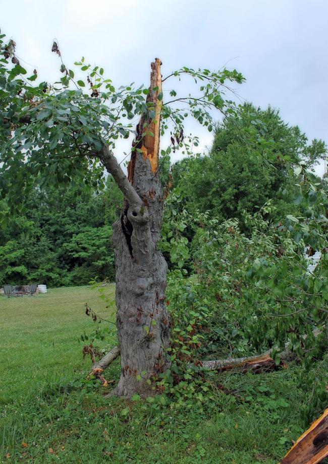 crab-apple-tree-storm-June2014