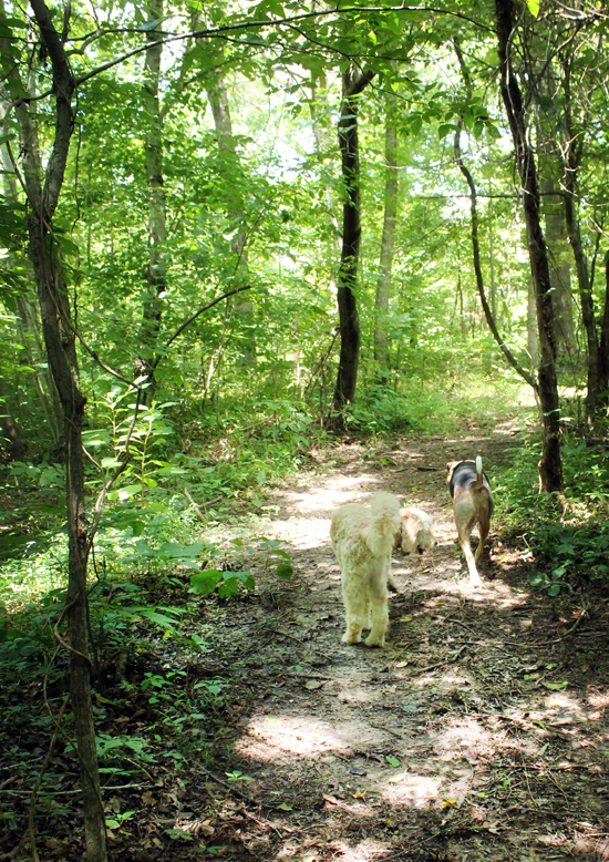 tennessee-wood-walking-path-dogs