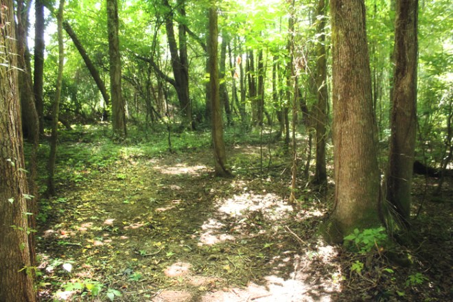 tennessee-wood-walking-path