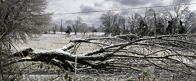 ice_storm_tennessee_tree_feb_2015