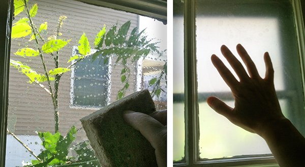 window-privacy-diy-contact-paper