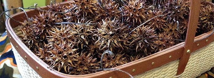 Basket of Sweet Gum Tree Seed Pods