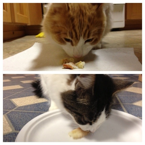 Both my cat (Jack) and my Parents cat (Ozzy) have a passion for crab. They were pretty happy with me.