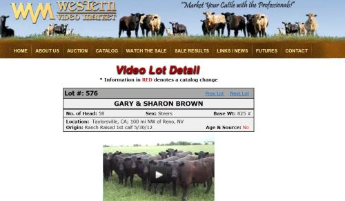 This is what a online cattle sale catalogue looks like (click here and it will take you to the video)