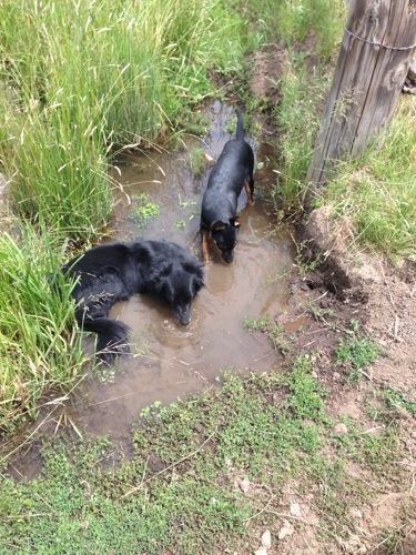 Aunt Jinx taught her to swim in the ditches.