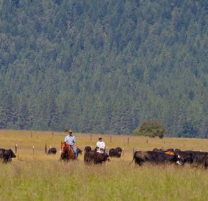 Holistic management helps families work together and build profitable ranches.