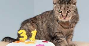 Meet Nutmeg - The World's Oldest Cat at 31!