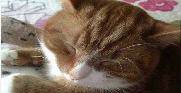 Leo the cat was found dead in Riddings Park