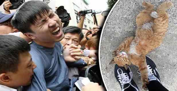 The poor cat a student beat to death before dumping in a nearby river