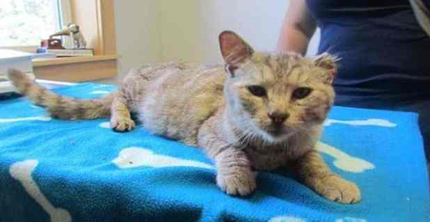 Will lost part of his ear and a lot of weight, but was otherwise in good shape. (New Perth Animal Hospital/Facebook)