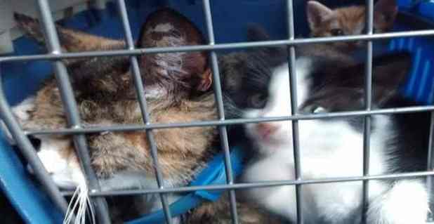 The cats dumped in the toilet at Stepping Hill Hospital