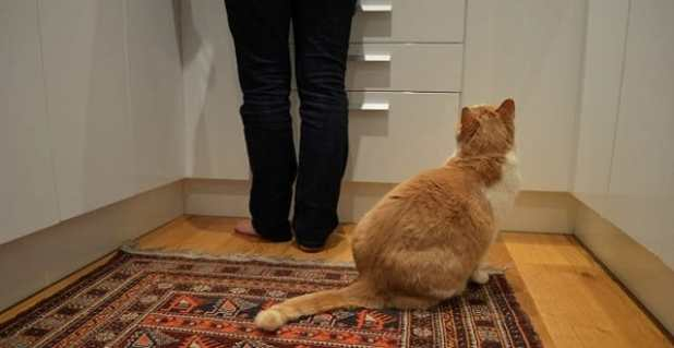 Arthur weighs in between 7 and 8 kilograms. The average New Zealand cat should weigh between 4 and 5.5 kilograms Vet Rochelle Ferguson said.