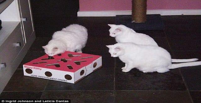 Cat Food Tray Mental Stimulation