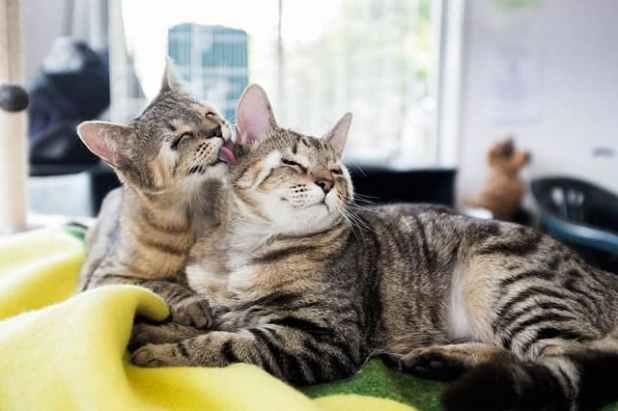 cats-without-eyelids-dora-felix-56ewsgt6eg-min