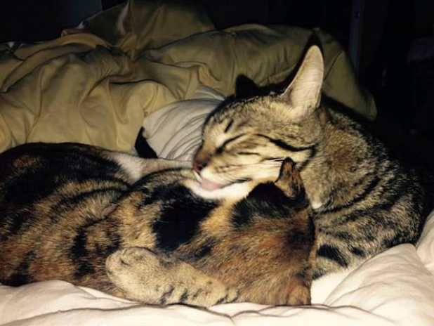 They love to cuddle up: Sophia and Leonidas catch a catnap.