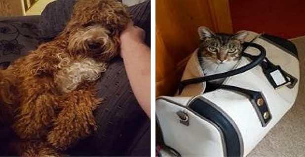 Lola is 'tolerating' Ruby says owner James Kelvin