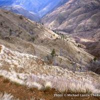 Hel5-6 Saddle Creek Trail, Hells Canyon, OR copy